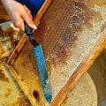 пчёлы откачка мёда