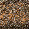 пчела относиться к насекомым
