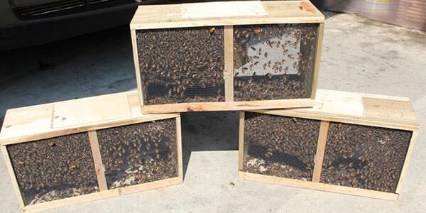пакет пчёл