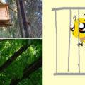 как поймать рой пчёл в ловушку