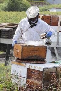 обработка пчел дым пушкой