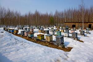 когда просыпаются пчелы весной