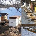когда выставлять пчел весной