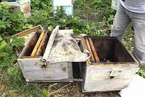 лечение аскосфероз пчел