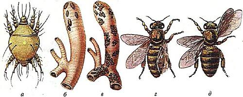 массовая гибель пчел