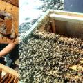 обработка пчел весной