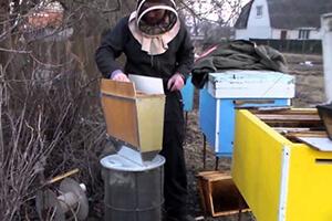 пчеловодство весенние работы на пасеке