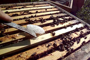 пчеловодство весенние работы