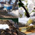 пчелы весной
