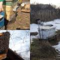 первый осмотр пчел весной