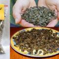 подмор пчелиный лечебные свойства