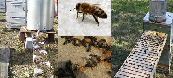 поилка для пчел весной