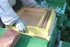 потолочная кормушка для пчел