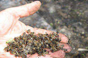 весенняя обработка пчел
