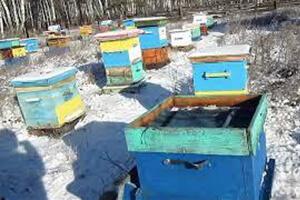 сохранение среднерусской пчелы