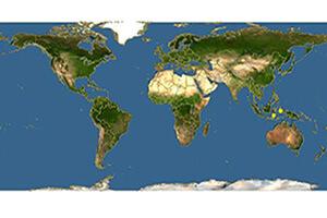 где живут мегахилы