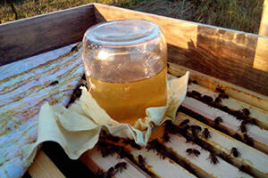 работа с пчелами в августе