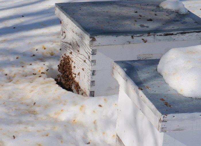 зимовка пчел на улице