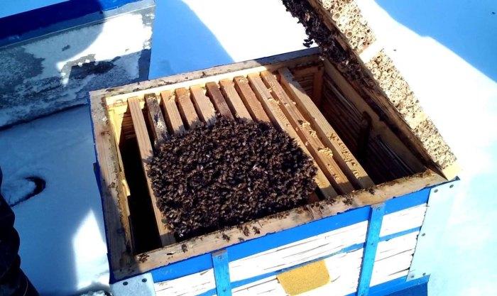 подготовка пчел к зиме в октябре