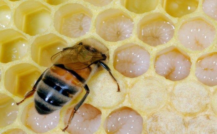 как называется самец пчелы